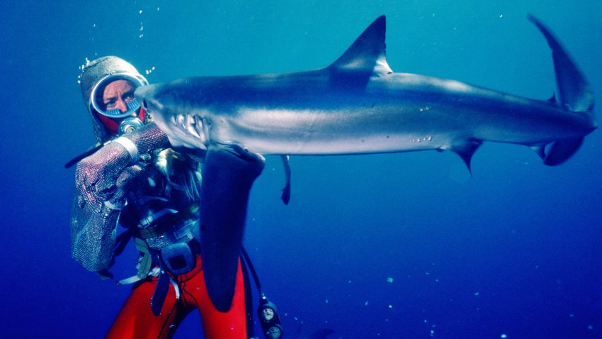 shark bites diver