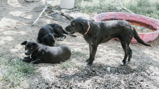 """Authorities rescued more than 50 dogs from """"deplorable conditions"""" at a Hill County residence earlier this month, according to the Humane Society of North Texas."""