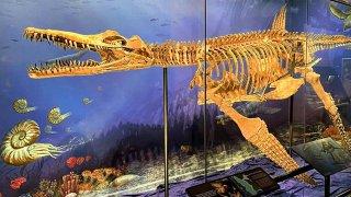 Texas Nessie Plesiosaur display at the Heard