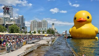 big rubber duck
