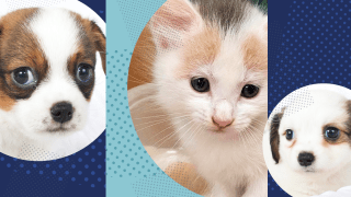 From left: Shelby, Cinderella and Claire are just a few of the animals waiting for their furrever home.