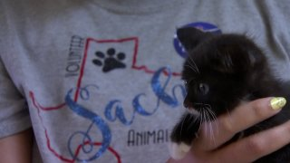 NBC and Telemundo are teaming up again with animal shelters across the country for the 'Clear the Shelters' adoption campaign.