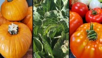 Prairie View A&M's 'Specialty Crops' Program Aims to Help Farmers Grow