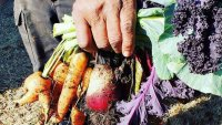 Prairie View A&M Helps Farmers Grow Through 'Specialty Crops'