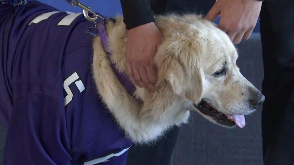 Makenzie Koch's dog Riggins