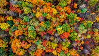 Climate Change Is Stalling the Process That Makes Leaves Change Color in the Fall