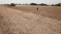 Development Boom Leads to Plight for North Texas Black Farmers