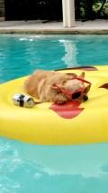 [UGCDFW-CJ-dog days]Relaxing pup