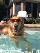 [UGCDFW-CJ-dog days]Dog Days Photo