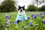 [UGCDFW-CJ-bluebonnets]Gardner Pepper in the Bluebonnets