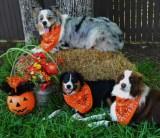 Dogs Get Halloween Treats From Texas Children