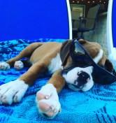 [UGCDFW-CJ-dog days]Dog days of summer