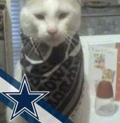 [UGCDFW-CJ-blue star]#cowboy fan - gizimoto