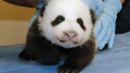 pandacam2