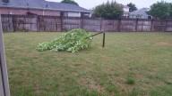 [UGCDFW-CJ-weather]Storm damage 5-3