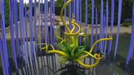 Chihuly-01