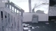 Hungry Bear Steals Dog Food from Porch