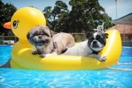 [UGCDFW-CJ-dog days]Duck and Puck enjoying the sun