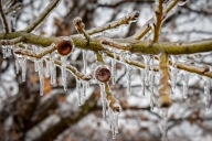 [UGCDFW-CJ]Winter pic