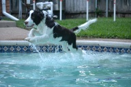 [UGCDFW-CJ]TJ jumping into water