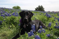 [UGCDFW-CJ]River in the blue bonnets
