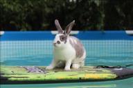[UGCDFW-CJ-pets]Thumper staying cool