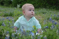 [UGCDFW-CJ-bluebonnets]baby bluebonnet photo