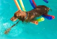 [UGCDFW-CJ-dog days]Szoszi enjoys th summer