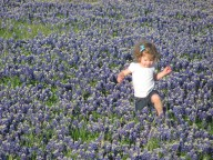 [UGCDFW-CJ-bluebonnets]Bluebonnet Photo