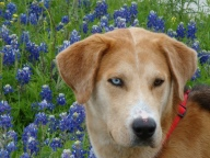 [UGCDFW-CJ-bluebonnets]Bunjy and Bluebonnets