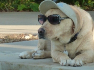 [UGCDFW-CJ-dog days]Pudge chillaxin by the pool at Camp Craig Allen