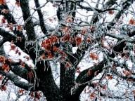 [UGCDFW-CJ-weather]Ice Ice Baby