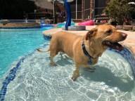 [UGCDFW-CJ-dog days]This is my dog Harley