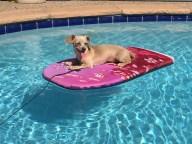 [UGCDFW-CJ-dog days]Daisy Adrift
