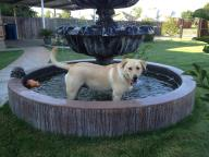 [UGCDFW-CJ-dog days]Sadie in fountain