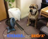 [UGCDFW-CJ-dog days]WOOWOO. dog days of summer