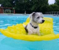 [UGCDFW-CJ-dog days]Maxx cooling off