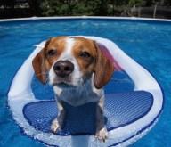 [UGCDFW-CJ-dog days]Jersey pups