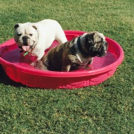 [UGCDFW-CJ-dog days]Ammo and Charlie enjoying this Aledo afternoon