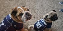 [UGCDFW-CJ-blue star]Diezel and Zeus are ready!! Go Cowboys!!!