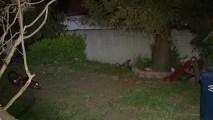 Newborn's Remains Found in Ca. Yard
