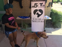 Clear the Shelters Adoption Photos - 2