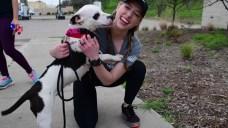 Go Run With Pups: Dallas Animal Services Launch New Program