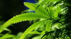 Gov. Abbott Urges DAs Against Dropping Marijuana Cases