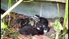 Squirrel Snuggles With Kittens