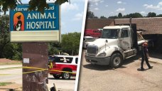 Flatbed Truck Crashes Into Veterinary Hospital in Euless