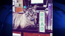 "NTX City Council Votes To Reinstate ""Library Cat"""