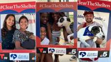 Pets Adopted on Clear the Shelters Day 2019