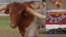 See & Do: Fuel City's Longhorns, Tacos, Gas for All Texans