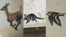 Mystery Artist Responsible For Several Animal Portraits